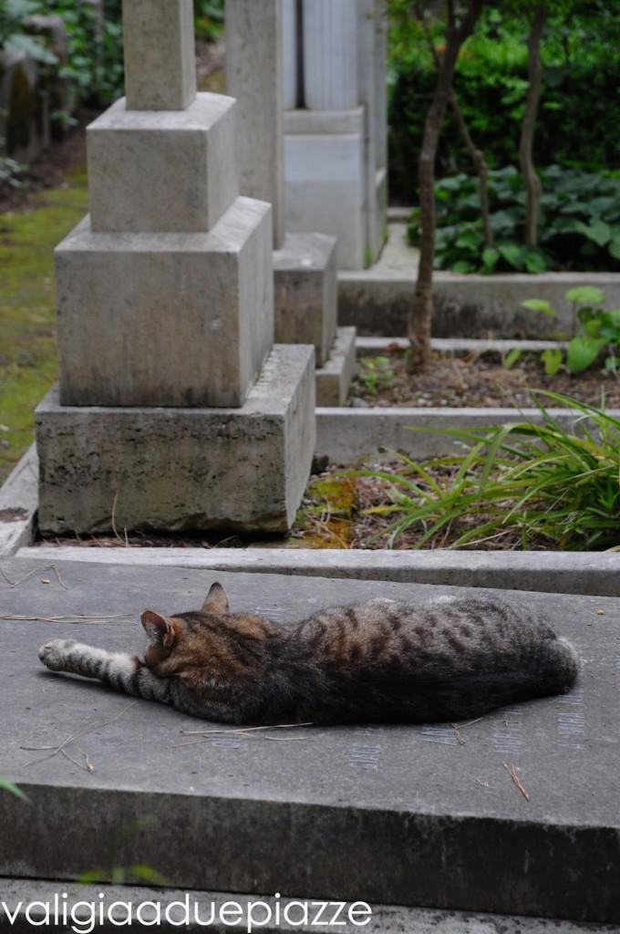 colonia felina cimitero acattolico