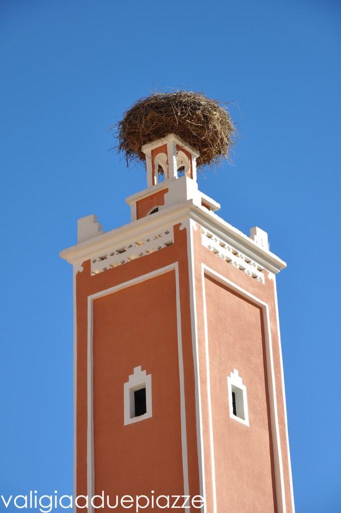 nido cicogna minareto marocco