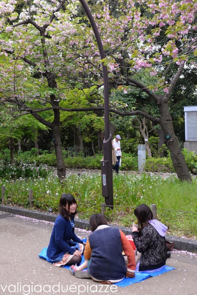 tokyo hanami ueno park