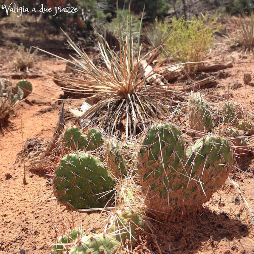 cactus cuore mesa arch