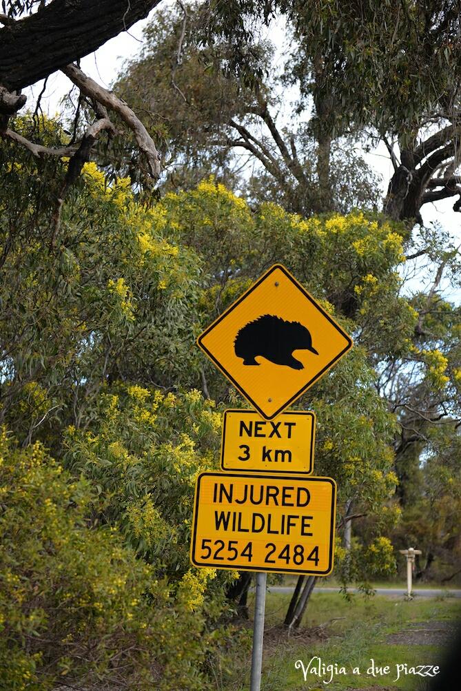 segnale stradale echidna australia