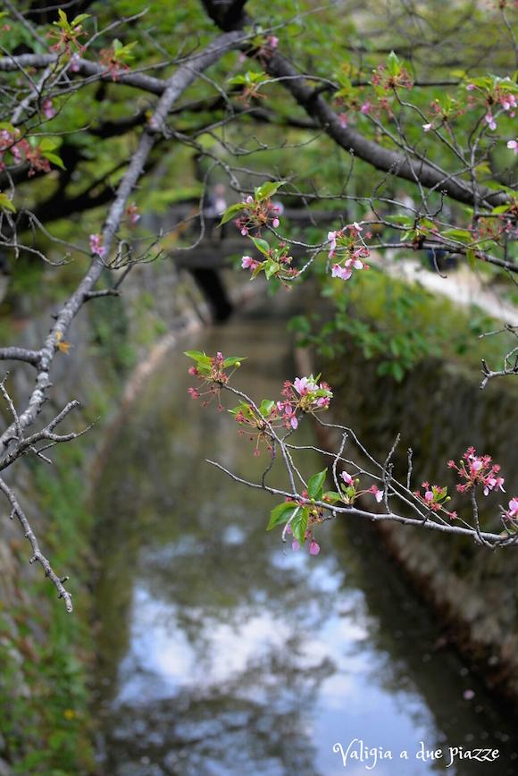 Sentiero della Filosofia Kyoto sakura