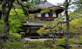 Giappone, tre giorni a Kyoto: imparando il significato di komorebi