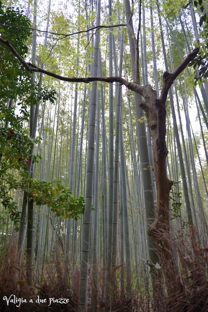 Bosco di bambù Arashiyama Sagano Kyoto Giappone