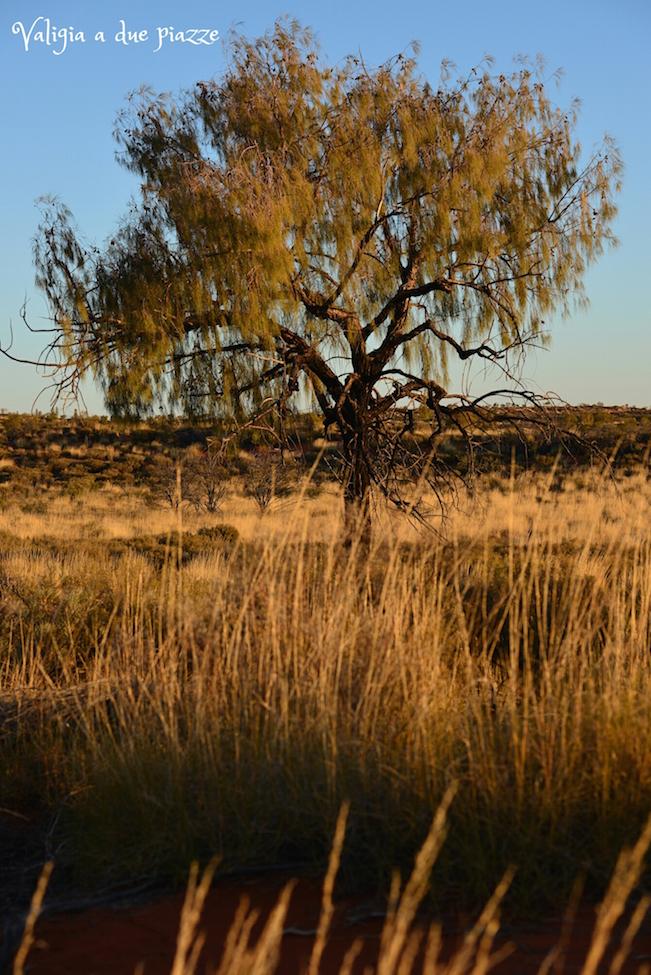 Northern Territory Yulara