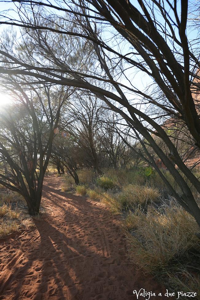 escursione Uluru