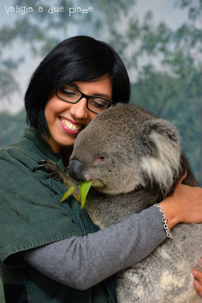 valigia a due piazze abbracciare un koala