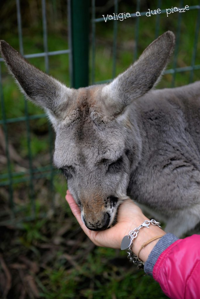 marsupiale cleland