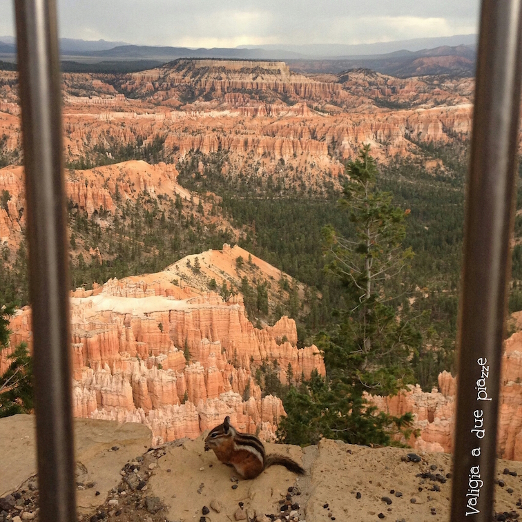 scoiattolo striato bryce canyon utah