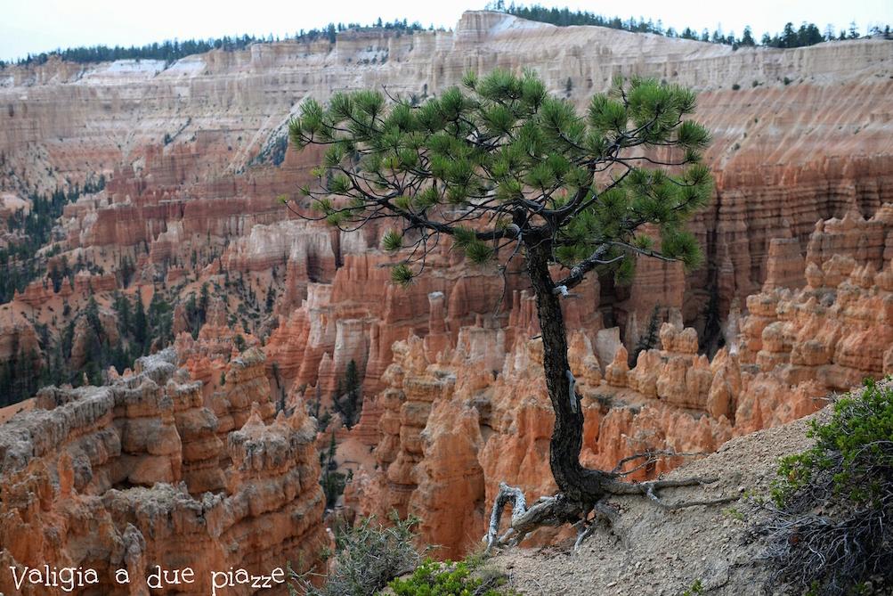bryce canyon utah stati uniti
