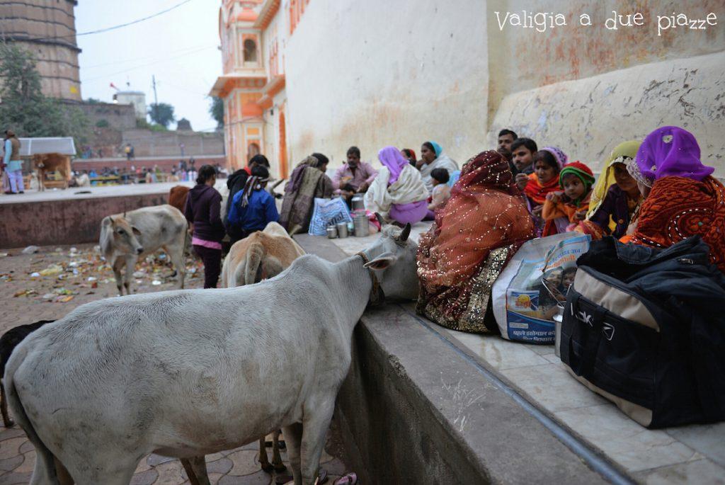 lion la strada verso casa ganesh talai india
