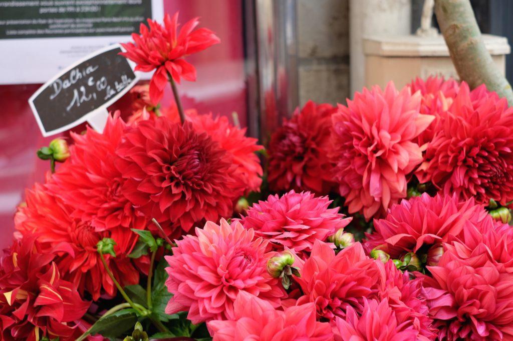 fiori Parigi