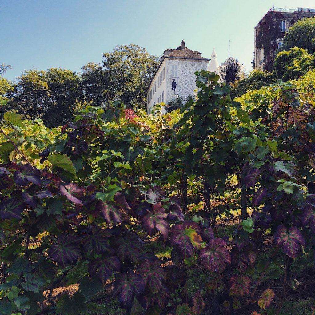 Vigna di Montmartre Parigi