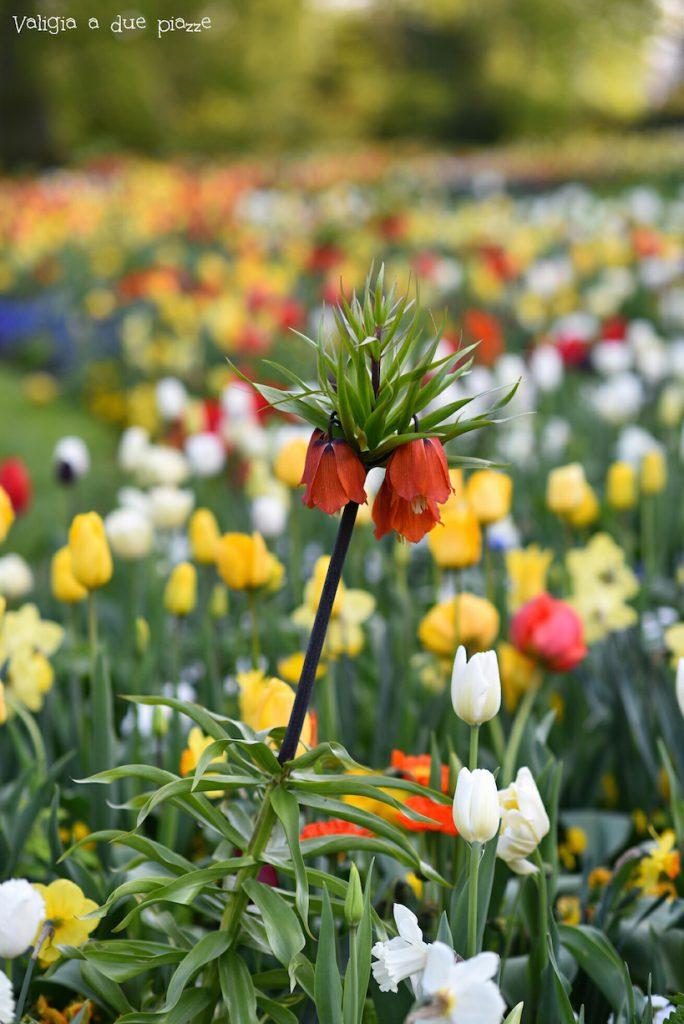 Isola dei fiori Mainau Bodensee