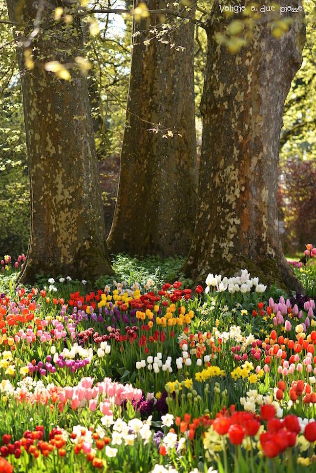 isola dei fiori di Mainau Bodensee