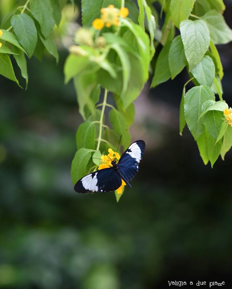 Casa delle farfalle Isola di Mainau