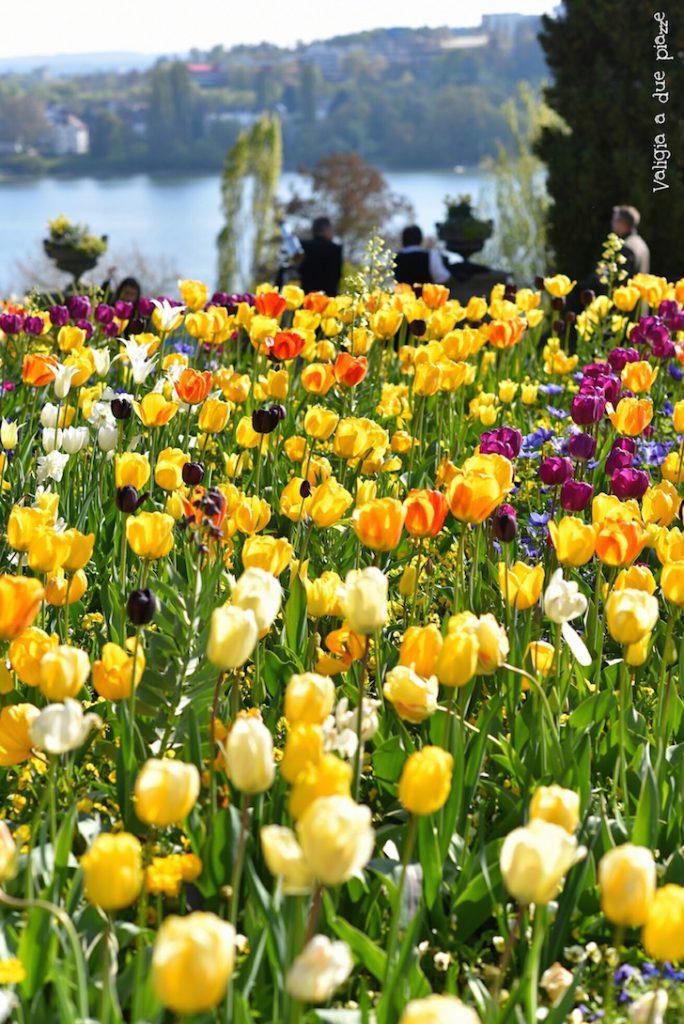 tulipani isola di Mainau
