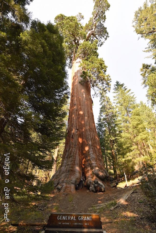 Generale Grant Sequoia