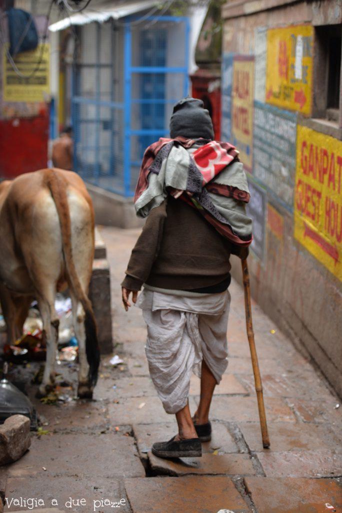 uomo vacche sacre varanasi india