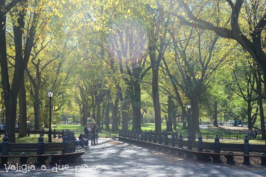 Central Park foliage Halloween