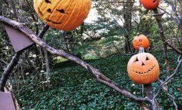 Autumn in New York: che cosa fare in città tra zucche, Halloween e foliage