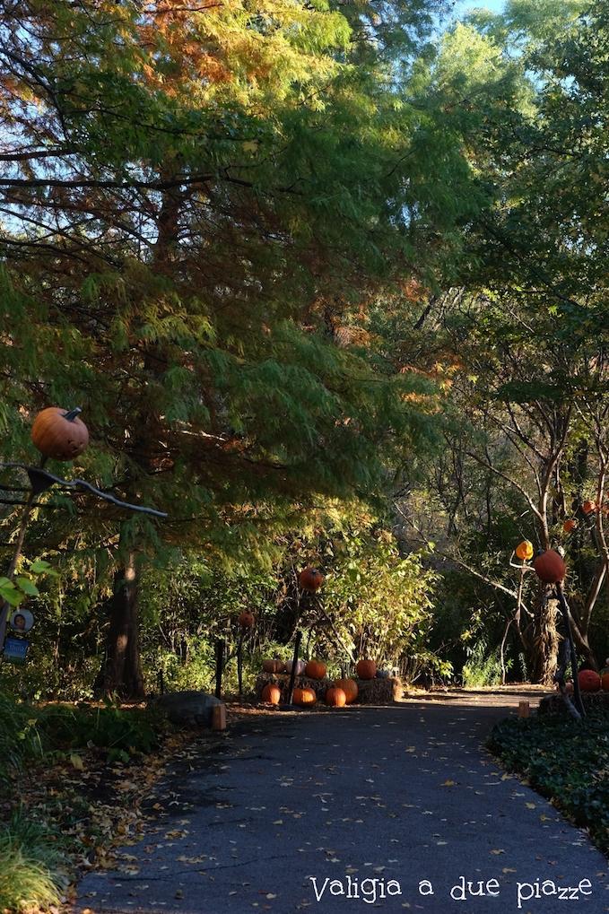 NYBG pumpkin NY