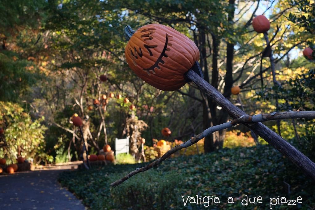 NYBG pumpkin Halloween
