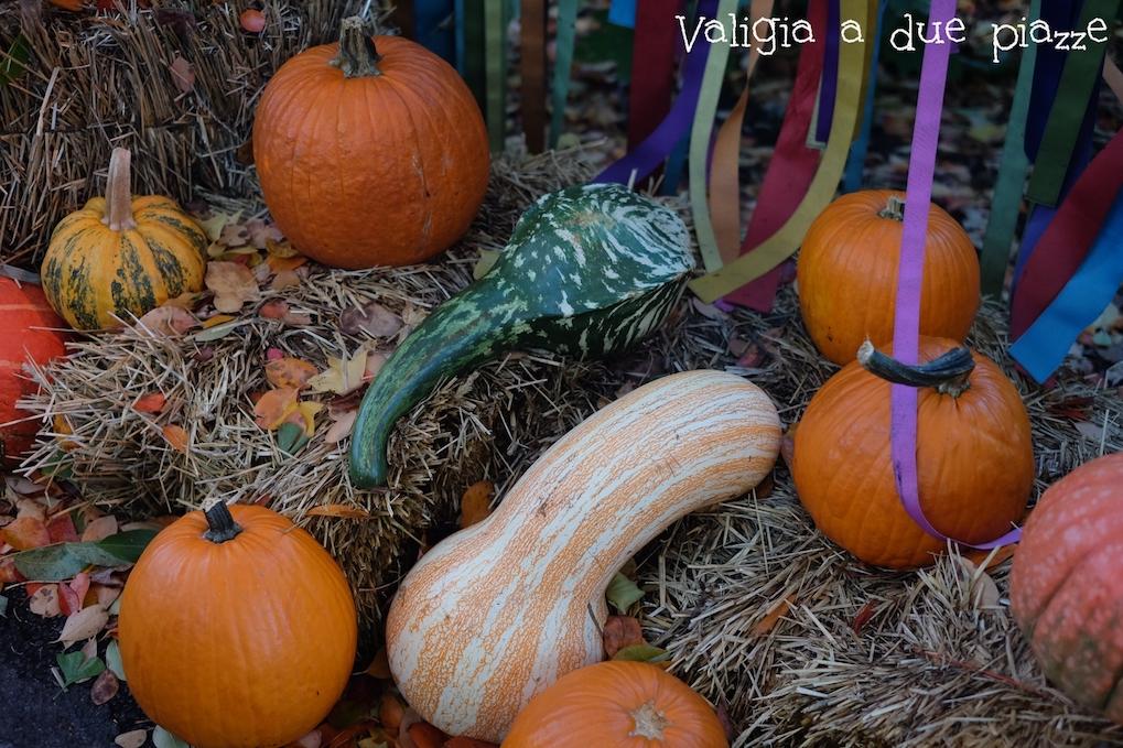pumpkin new york