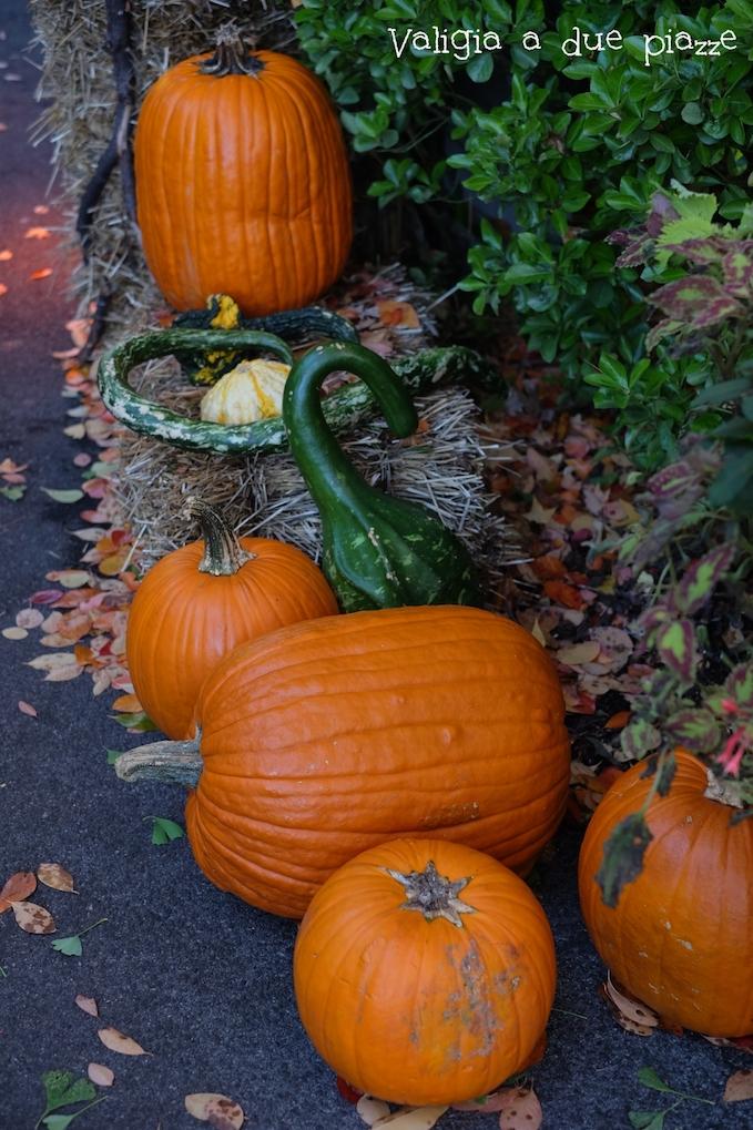 pumpkin halloween nyc