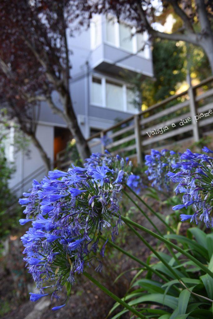 Le case di legno di Macondray Lane San Francisco