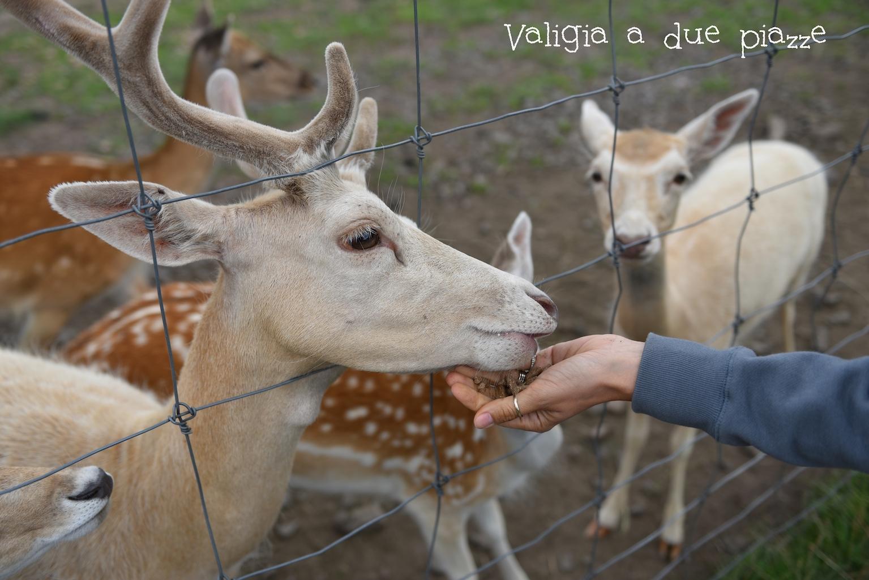 scottish deer centre fife scozia