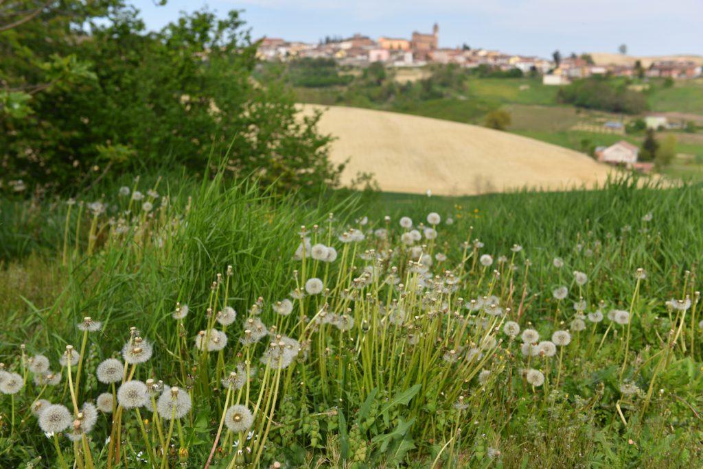 Castelnuovo Calcea panorama Monferrato