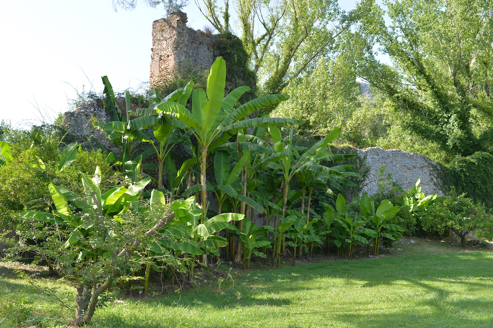 Giardino di Ninfa banani