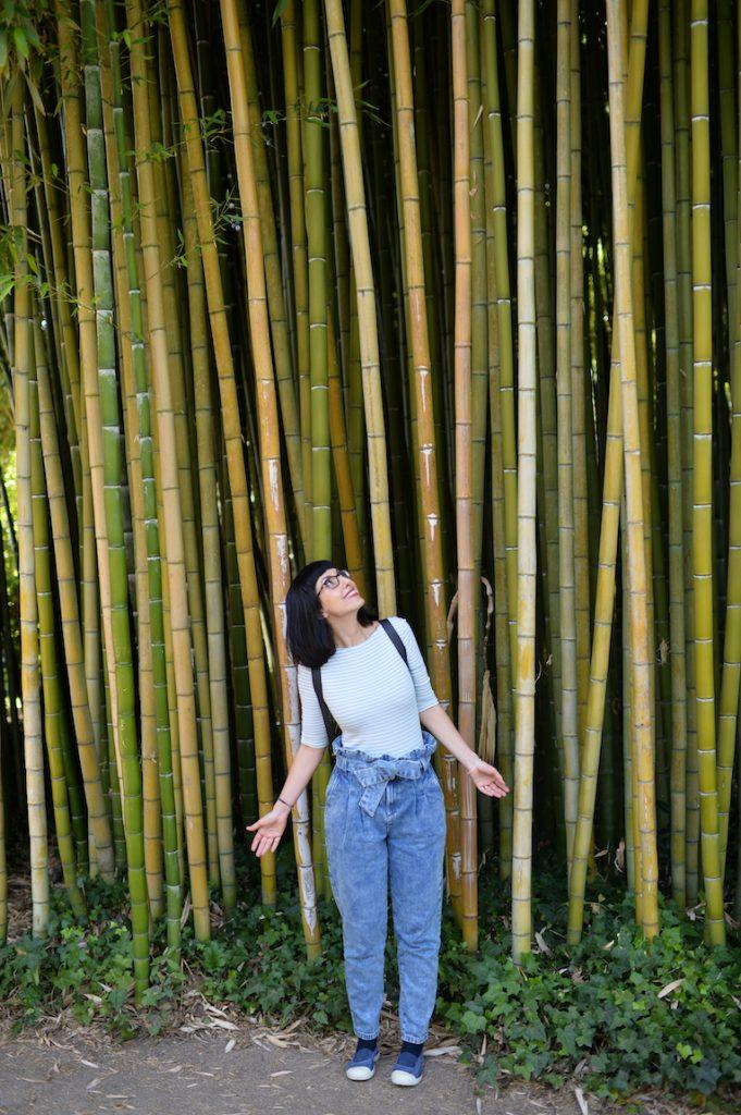 Sorgente di bambù