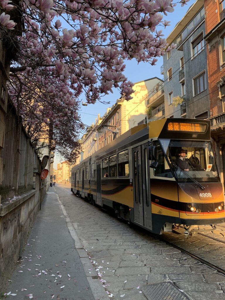 magnolie via Lamarmora Milano