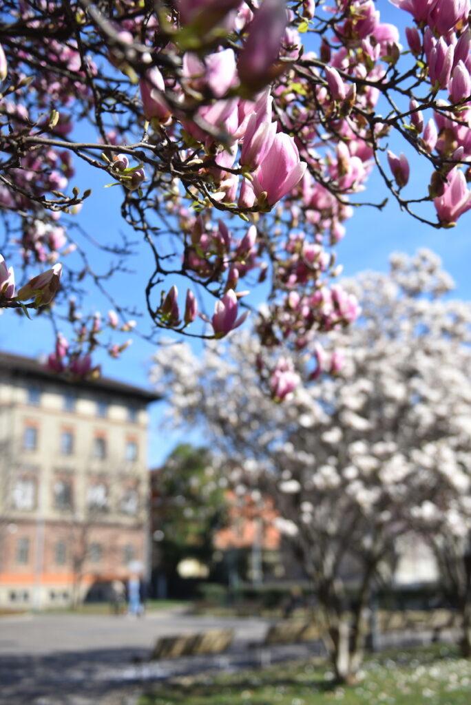 piazza Tommaseo Milano