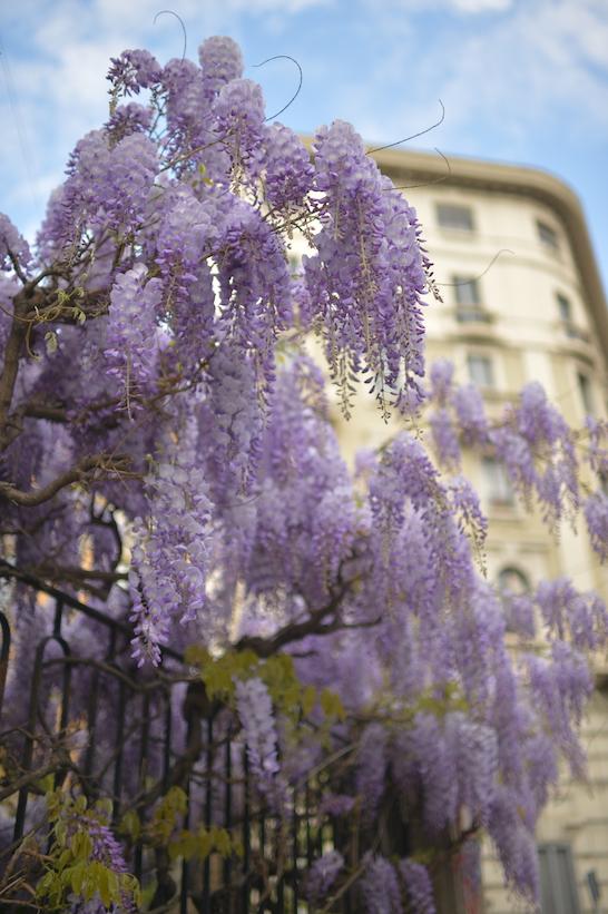 viale Gran Sasso Milano