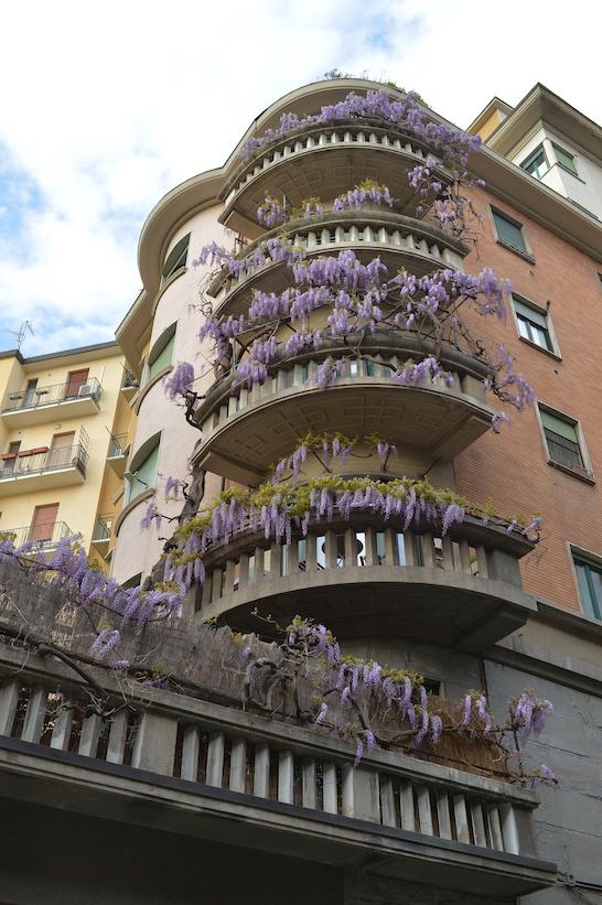 via Paisiello glicine Milano