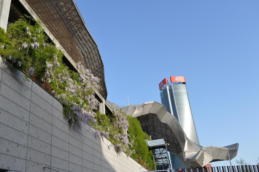 Scarampo glicini Milano citylife